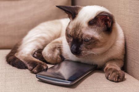 Jonge mooie Thaise kat liggend op de bank en het spelen met een mobiele telefoon. Pet selecteert een applicatie voor entertainment.
