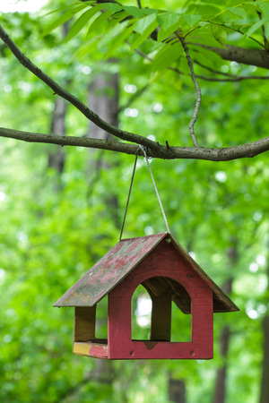 feeders: Feeders for songbirds. Feed the birds in summer Stock Photo