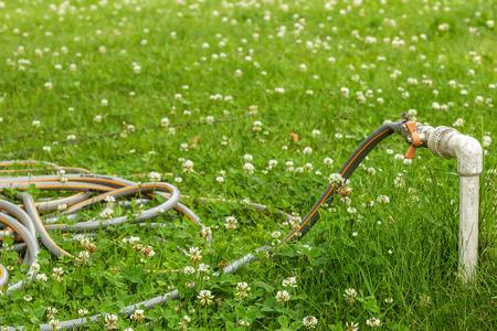 kunststoff rohr: Kunststoffrohr auf der grünen Wiese von Klee