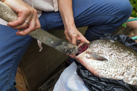 unsanitary: Woman cleans river fish in unsanitary conditions Stock Photo