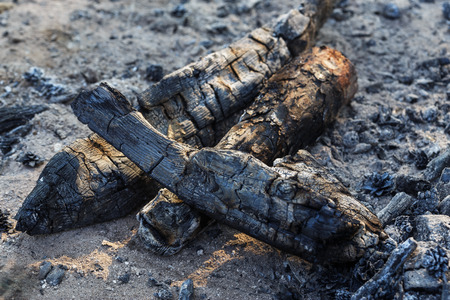 burnt wood: Burnt wood from a fire in nature.