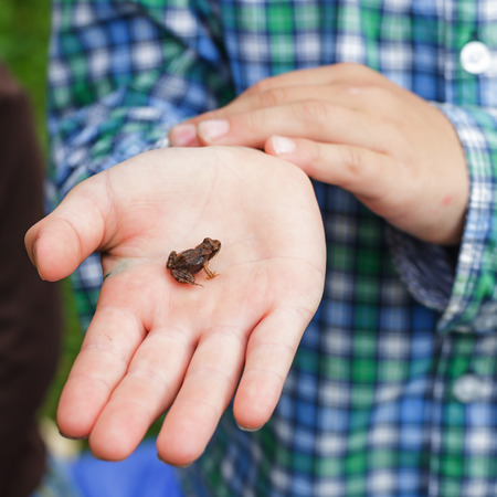tiny frog: Boy holds in the palm of a small frog Stock Photo