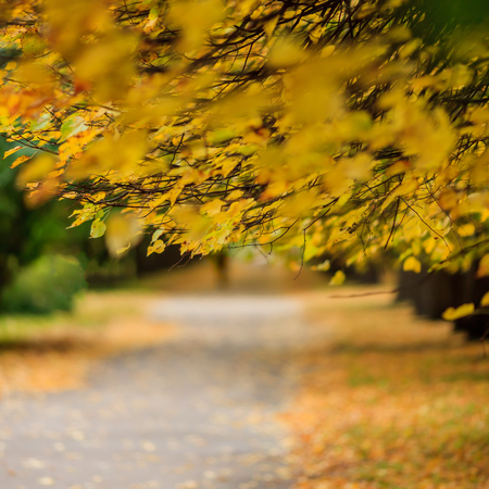 walking paths: Blurred background with walking paths Stock Photo