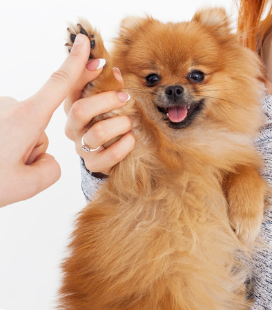 Give me five. Handshake between woman and dog