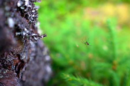 Spider on a web in the forest closeup. Trap for insects Stock Photo