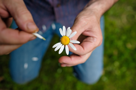 The man guesses on a chamomile on nature in summer. Stock Photo