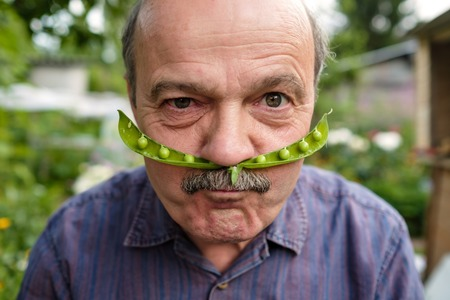 An elderly man is fooling around. He holds a pea pod near his face like a mustache