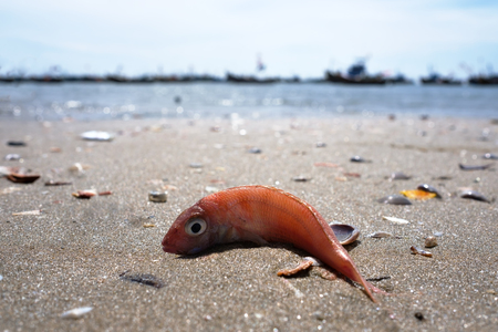 Dead pink fish on dirty seashore. Ecological problems with pollution 免版税图像