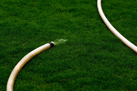 Hose for watering the grass in a sunny dry day. Water pours on the lawn. Inefficient use of resources