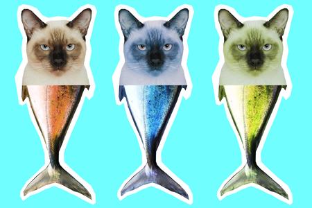 Tête de chat thaïlandais et chimère à queue de poisson. Collage d'art contemporain. Banque d'images