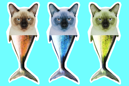 Thai cat head and fish tail chimera. Contemporary art collage. Stock Photo