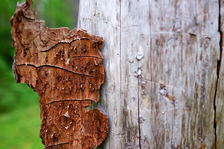 Traces of bark on tree trunk. Beautiful patterns created by nature Stock Photo