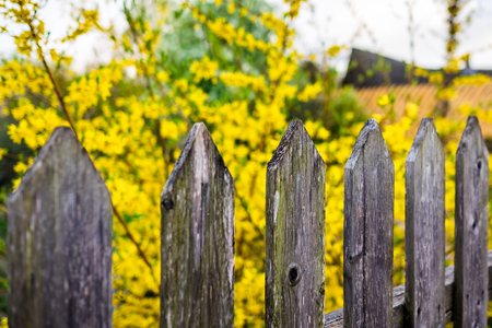 Wooden fence and yellow blurred flowers on spring sunny day Banque d'images - 122472166