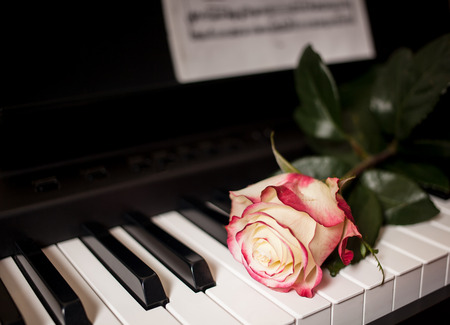 tea rose lies on the the piano keyboards