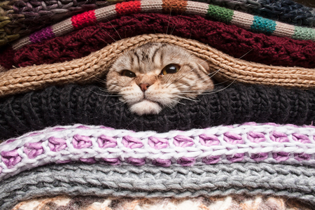 angry cat is preparing for winter, wrapped up in a pile of woolen clothes Stock Photo