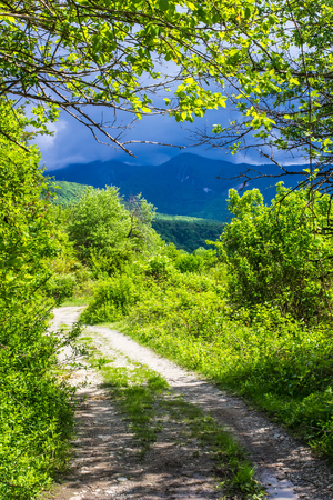 scenic drive: winding road disappearing into the mountains of Abkhazia with thunderclouds in sunny weather photographed through the foliage