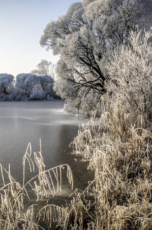 Trees and grass are in hoarfrost on the lake, covered with ice, frosty, sunny morning
