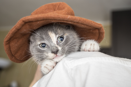 Little a sad kitten with hat sits on the shoulder the owner, close-up