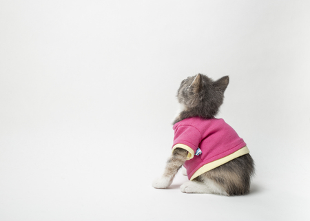 metis: Cute of playful the kitten in scarlet shirt on white background