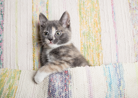 enticing: Cute kitten playing with the mat. Close-up