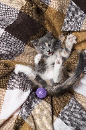 Cute of playful kitten lies on a plaid beside toy