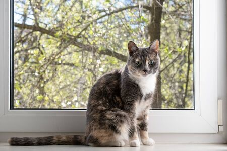 Pensive cat sits on a windowsill by the window, against the backdrop of trees on a sunny spring day.