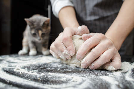 Baker hands knead the dough in the background interested kitten climbed on a table with flour and looks.