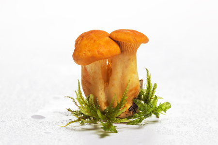 chanterelle mushroom with moss and water drops on a white background