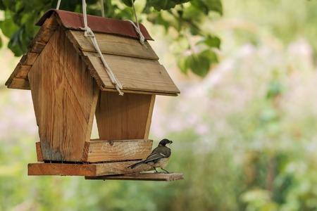 裏庭の送り装置の鳥の餌 写真素材
