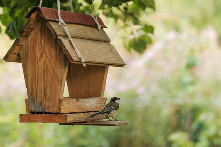 Bird feeding at backyard feeder Imagens - 84201592