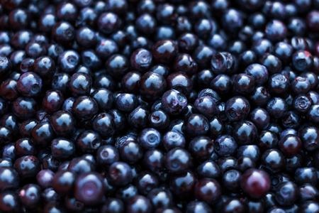 horticultural: Freshly picked blueberries Stock Photo