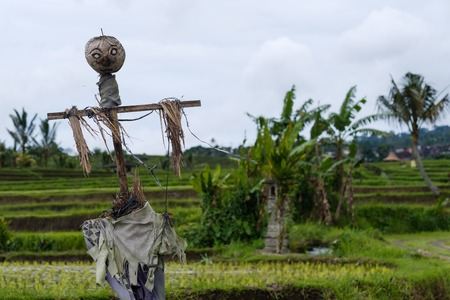 photo of scarecrow in field in Indonesia