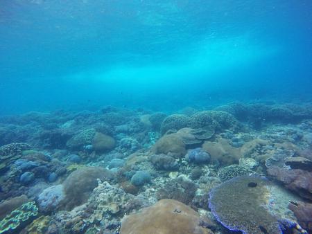 Tło podwodnej rafy koralowej w Bali