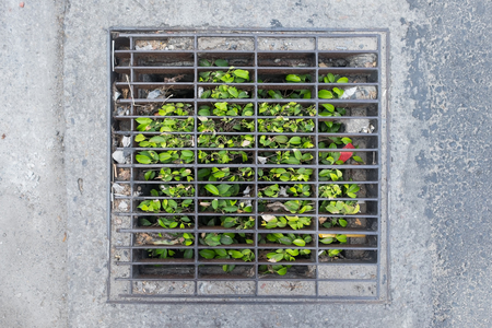 Grass growing through canalization or sewerage hatch. Stock Photo