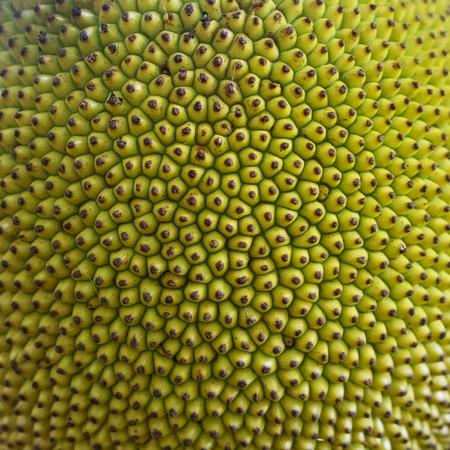 Rough Green texture. Close up of young jackfruit, popular asian fruit.