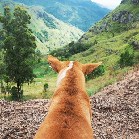 Dog looking at view from Ella rock in Sri Lanka