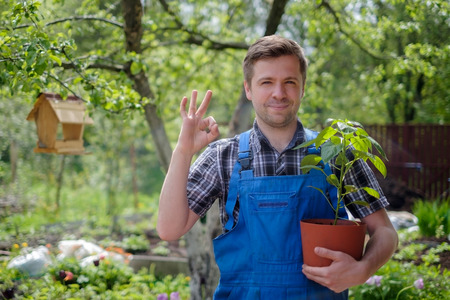 Young caucasian farmer man holding organic plants and showing ok sign. Bio vegetables garden