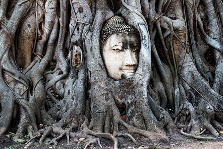 Ayutthaya, Thailand - October 31, 2017: Buddha face in Banyan tree and roots at Mahathat temple