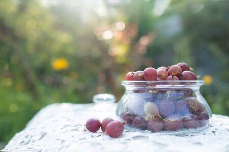Freshly picked harvest of green gooseberries in glass
