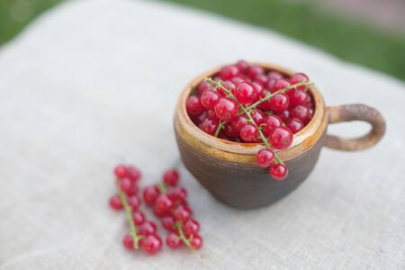 Red currant berries in small cup on table in soft sun light.