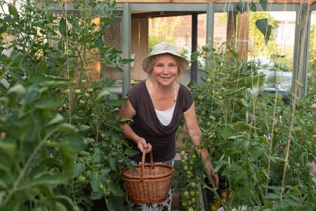 Caucasian mature woman with basket checking her green tomatos.