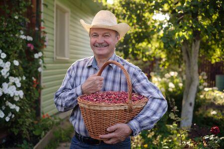 Mature hispanic man holding big busket with cranberries.