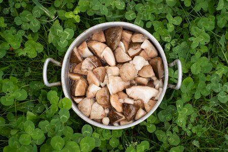 Raw delicious boletus edulis mushrooms in pan