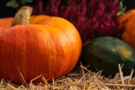 Colorful pumpkins on rustic wooden background. Decor element for Halloween or harvest autumn concept