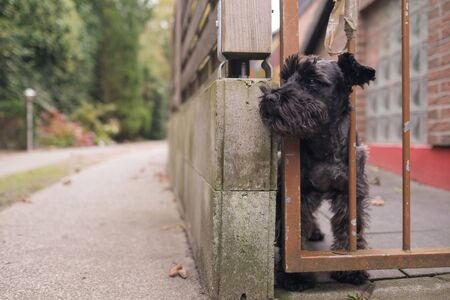 Cute small black dog behind fence waiting alone for his owner