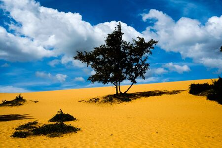 Lonely tree in the dessert. Cloudy sky and bright yellow sand