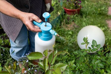 Protecting plant from bugs and insects with pressure sprayer