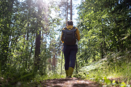Walking in summer forest. Female tourist hiking alone.