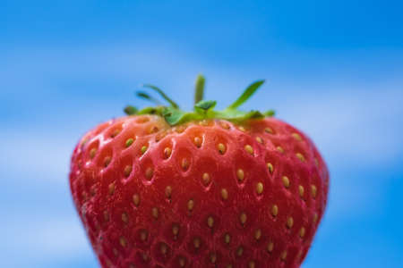 Part of red strawberries berry on blue background Banque d'images