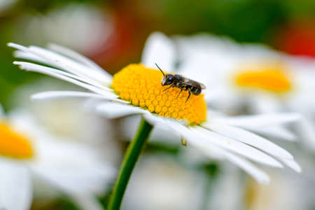 Insect on flower in macro photography. Macro view Banque d'images